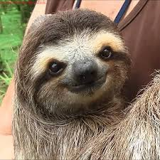 Angry Sloth Meme - best sloth gifs gifs show more gifs