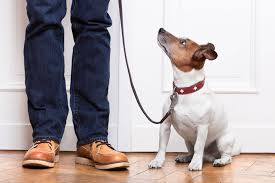 confirming the benefits of emotional support animals counseling