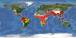 Americas Map by Browse Resources Malaria Atlas Project Malaysia Malaria Map Fit