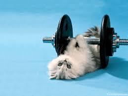funny animated cat aminals pinterest cat
