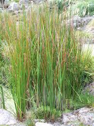 native plants in new zealand new zealand native plants ordinarygoodness