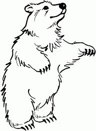 draw bear standing draw polar bear