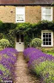 Ideas For Front Gardens Olive And Lavender Fakeitflowers Garden Containers Are