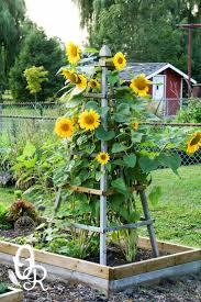 25 Beautiful Fence Art Ideas by Best 25 Sunflower Garden Ideas On Pinterest Country Garden