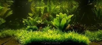 japanese aquascape nature u0027s chaos transformed into a jungle style aquacape the