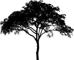 free vector graphic tree plant vegetation arbor free image