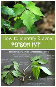 best 25 poison ivy removal ideas on pinterest poison ivy soap