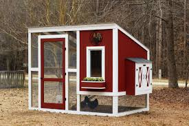 how to build a backyard chicken coop hgtv