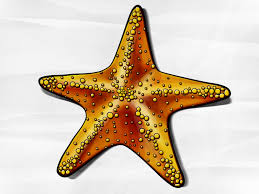 how to draw a starfish 6 steps with pictures wikihow