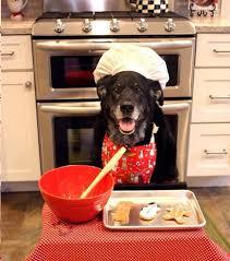 chien cuisine biscuits bio friandises recettes il est bio mon chien