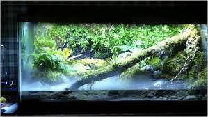 the 10 coolest types of freshwater aquariums blue planet aquarium