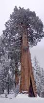 Most Amazing by The Most Amazing Trees In The World U2014 The Home Design