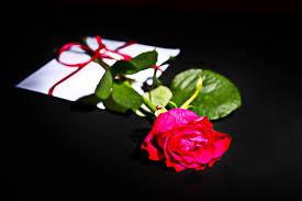 flower bands free images white leaf petal green color pink