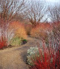 a winter garden anglesey wales yard pinterest gardens