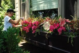 indoor flower box ideas