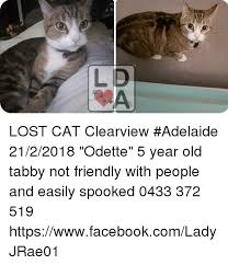 Lost Cat Meme - lost cat clearview adelaide 2122018 odette 5 year old tabby not