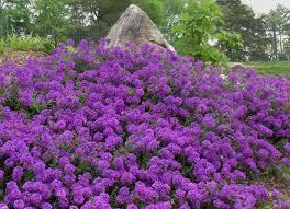 Summer Flower Garden Ideas - 254 best summer flower garden images on pinterest flower