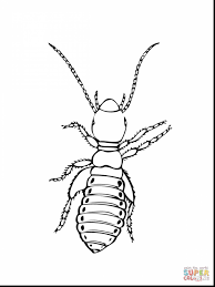 impressive printable insect coloring pages with bugs coloring