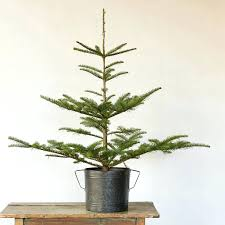 small live trees home depot real with lights for sale near