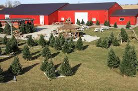 christmas trees geisler farms growing family fun