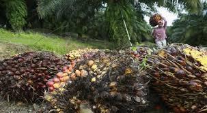 Minyak Kelapa Sawit Terkini hebat ri malaysia siap ekspor minyak kelapa sawit ke china