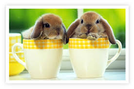 rabbit rabbit rabbits in a cup sky