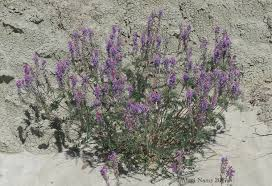 native alberta plants hiking in canada dry island buffalo jump provincial park alberta