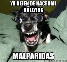 Memes De Chihuahua - ya dejen de hacerme bullying malparidas chia the chihuahua meme