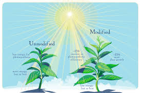 Plants That Dont Need Light Scientists Tweak Photosynthesis To Boost Crop Yield Illinois