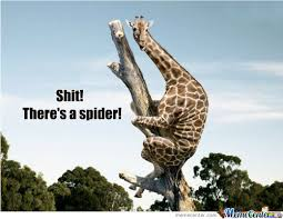 Funny Spider Meme - im still scared of spiders memes best collection of funny im