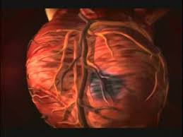Heart Anatomy Youtube Discovery Channel Body Story Episode 3 The Beast Within