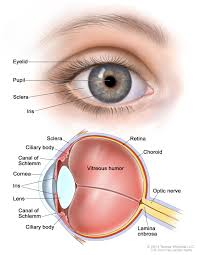 Symtoms Of Blindness Retinoblastoma Treatment Pdq U2014health Professional Version