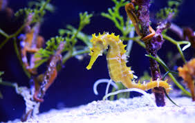learning about seahorses
