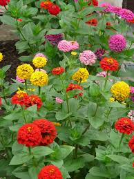 free images herb color botany colorful flora flowers