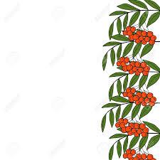 detailed ink drawing of rowan or rowanberry berries and rowan