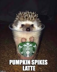 Pumpkin Spice Meme - pumpkin spikes latte punny funs pinterest coffee puns coffee