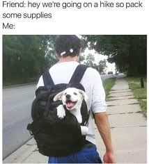 T Dog Meme - 19 dog memes you need in your life