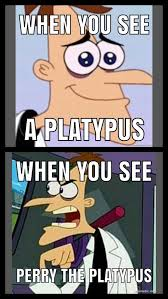Platypus Meme - curse you perry the platypus fandoms x pinterest platypus