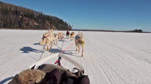 dog sledding mushing in fairbanks alaska youtube