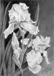 this amazing pencil sketch of a couple of iris u0027 look just like the