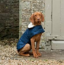 best dog coats in the uk 2013