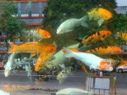 country s 1st ornamental fish park in chennai by august chennai