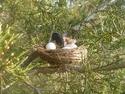 bird nest geocache container geocache hides