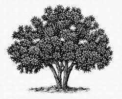 the tree illustration collection by steven noble on behance