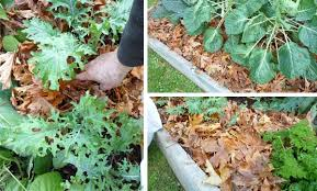 eartheasy blogfall is the season for mulching with leaves