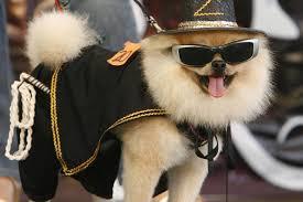 Zorro Costume Halloween 2010 Halloween Costumes Dogs Cutest Puppy Costumes 2011