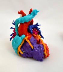 Anatomy Of The Heart Lab Cardiac 3d Print Lab Phoenix Children U0027s Hospital Heart Center