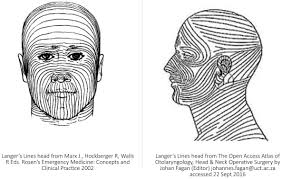 understanding the relation between face shape and hairstyle biodynamic excisional skin tension best lines revisiting