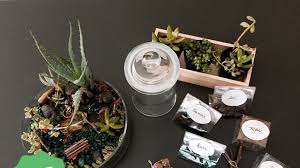 succulent kits create shoppe pre order your diy gift kit or craft party by