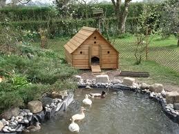 best 25 duck house ideas on pinterest duck coop raising ducks